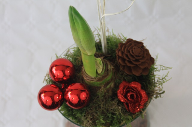Amaryllis in glas